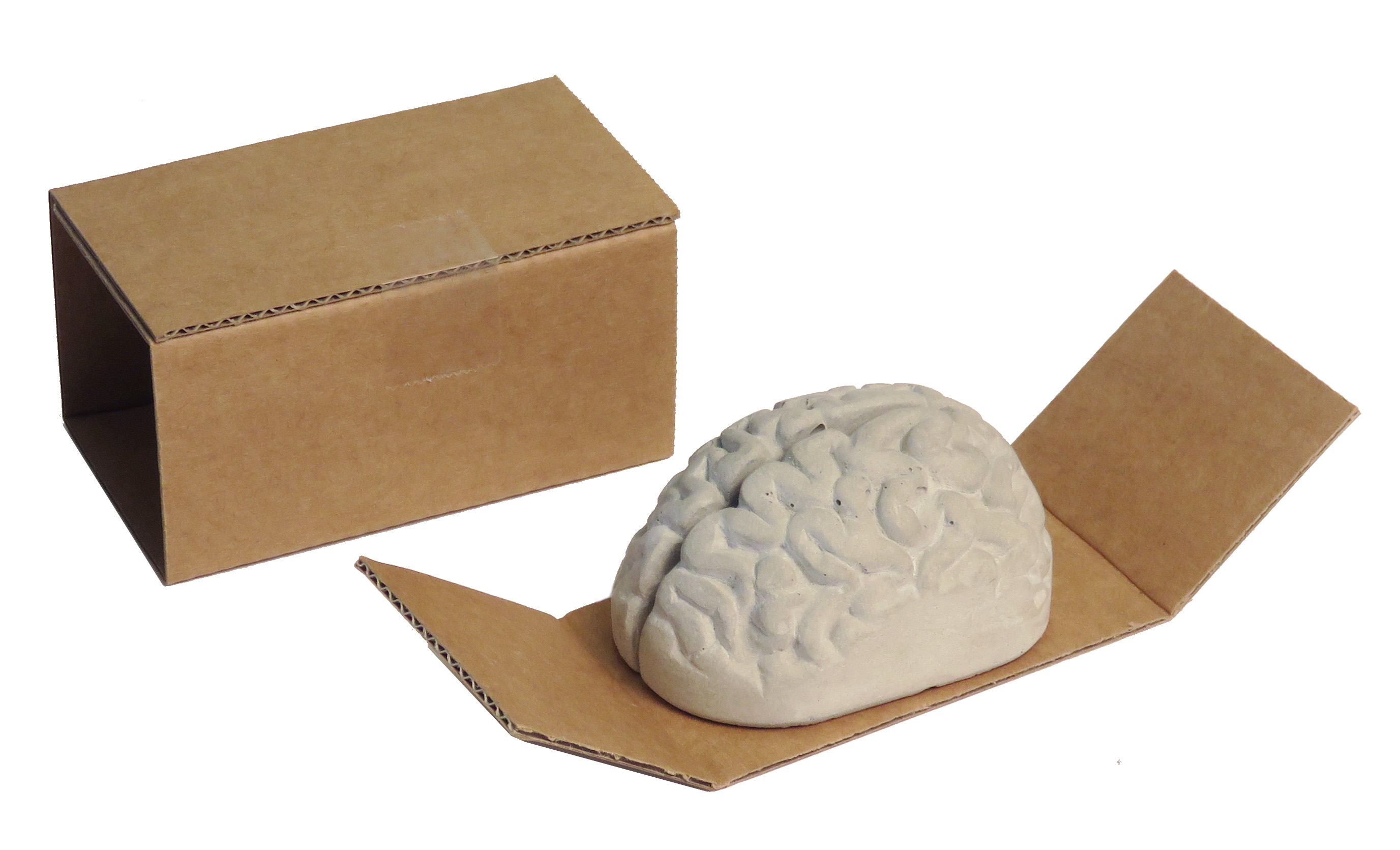 concrete brain 3d memoholder packaging